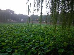 Xinlei Park