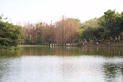 Dafu Mountain Forest Park