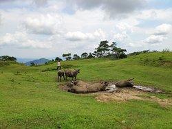 非常棒的一次旅行经历!景区非常原生态