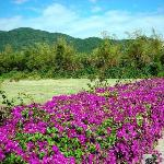 春节时,这里有青山、绿树和鲜花