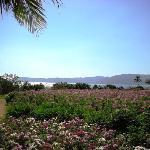 海边有人工种植的各种花坛