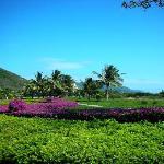 三亚爱琴海岸康年度假村掩映在花丛里