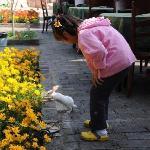 花园里的小兔子是女儿的好朋友