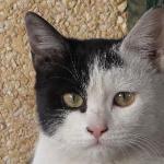 酒店门口的一只漂亮猫
