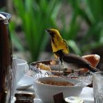 早餐与鸟儿分享