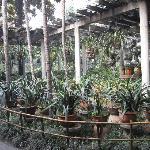 Taman Chengdu