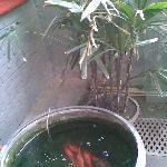 院子角落养的鱼