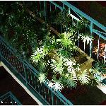 每层栏杆外都有绿色植物