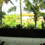 阳台和田园景观