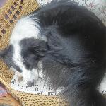 贪睡的瓦猫