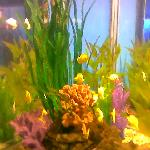 如此美丽的海底植物