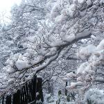 树枝和新芽被冰包裹着,在阳光的照射下很透亮