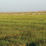 Tonghu Wetland Grassland Tourist Area