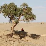 沙漠中的胡杨,修路工人的一片绿荫