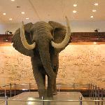 一楼大厅的大象