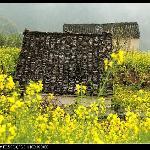 徽派建筑和油菜花