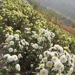 十月满山的菊花