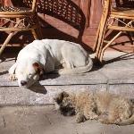夏姐家可爱的狗狗
