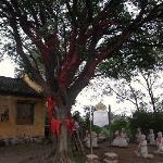 岛上的圣姥庙,这颗大树上缠满了红绸,都是祝福,电影《天仙配》的定情地。