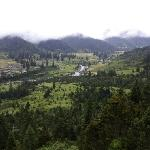 Lulang Forest