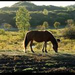 御道口景区途中散养的马儿