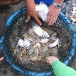 岸边有最新鲜的海鲜,刚上岸的螃蟹15块一斤哦...
