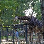 长颈鹿好像不是很大