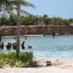 迪拜-shallow water dolphin experience