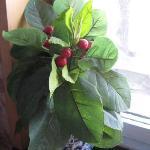 窗台的植物