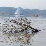 Qingshan Lake