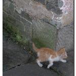 见人就跑掉的小猫
