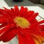 酒店餐厅桌上的花花~~