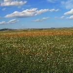 金莲川草原,《元上都》就位于她的腹地,一望无际的绿丝毯般的草地,还有那各色各样的花,那简直就是花的海洋……