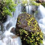 瀑布里的绿色