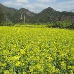 Nanxijiang Foto