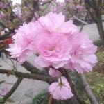 Foto de Nanshan Botanical Garden