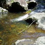 清澈的溪流