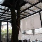 有大树穿过咖啡厅