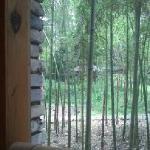 饭厅外的竹林