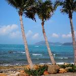 11年4月三亚行 599海边椰树