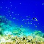 马尔代夫--海底世界