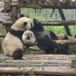 Giant Panda Breeding Research Base (Xiongmao Jidi)
