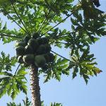 美丽的椰子树