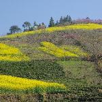 附近其他的山坡也都值得转转。还有桃花看。