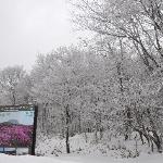汉拿山山脚雪景