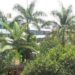 站在酒店的廊间看窗外,满眼都是绿色