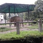 我的大象哥哥!!!好乖的