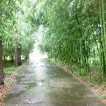 Anji Zhubo Park