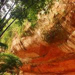 Chishui Cyathea Reserve