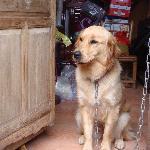 小晖家可爱的狗狗